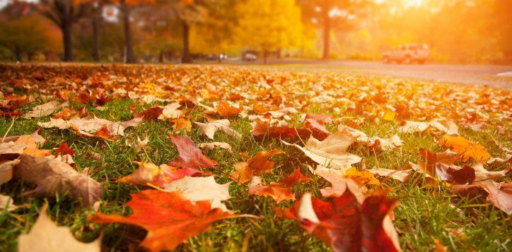 autumn-leaves-min